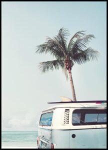 palmera y coche