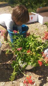 niño con las plantas y cubo de agua