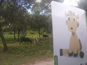 lámina de cabras con las cabras